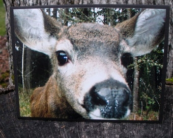 Young Deer Says Hi Close Up Photo Card