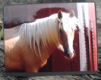 Colored Palomino Horse Head Photo Card