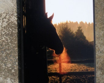 Horse Head Silhouette Frosty Morning Picture Card