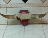 Mini Longhorns
