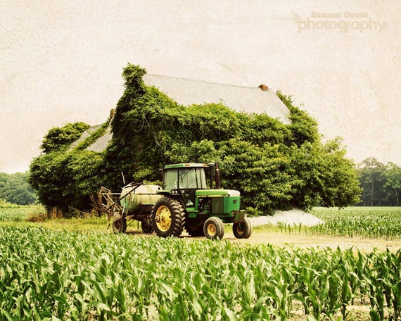 Rustic Art Country Decor Farm Decor - Overgrown Barn - Lush Green Ivy Covered Barn Tractor Corn Field - 8x10 Fine Art Photography