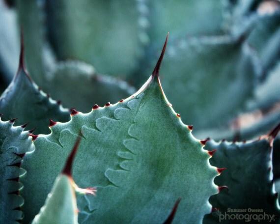 Southwest Home Decor Photograph- Spired Succulents - Succulent Green Desert Black Sharp Pointed Cactus - 8x10 Fine Art Photo Print