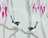 Australian birds, blue fairy wrens, Giclee illustration Print, Animal painting