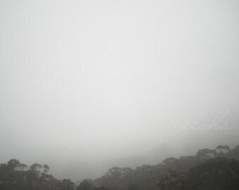 black white photograph fog photo fine art Blue Mountains Echo Point Sydney trees grey gray foggy mist wall decor
