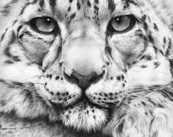 Leopard, Paper PRINT 11x14, Snow Leopard, Charcoal Drawing, Wild Animal, Realistic Portrait, Black and white, Wildlife