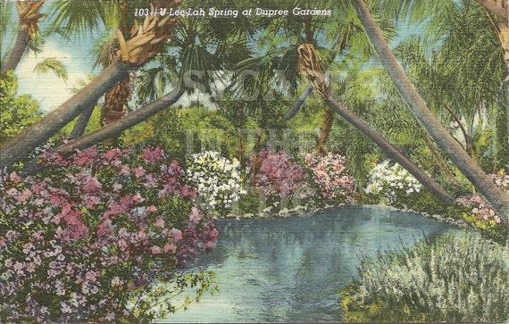 U-Lee-Lah Spring at Dupree Garden - Tampa Florida Vintage Linen Postcard
