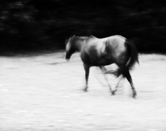 Ghost Horse Black and White Horse Photography