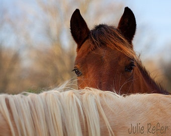 Horse Photography Equestrian Art Print