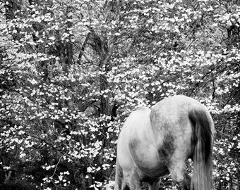Horse Photography Black and White Equestrian Art