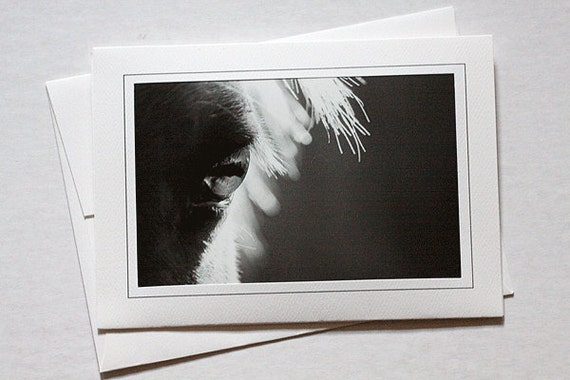 Horse Photo Note Card Framable