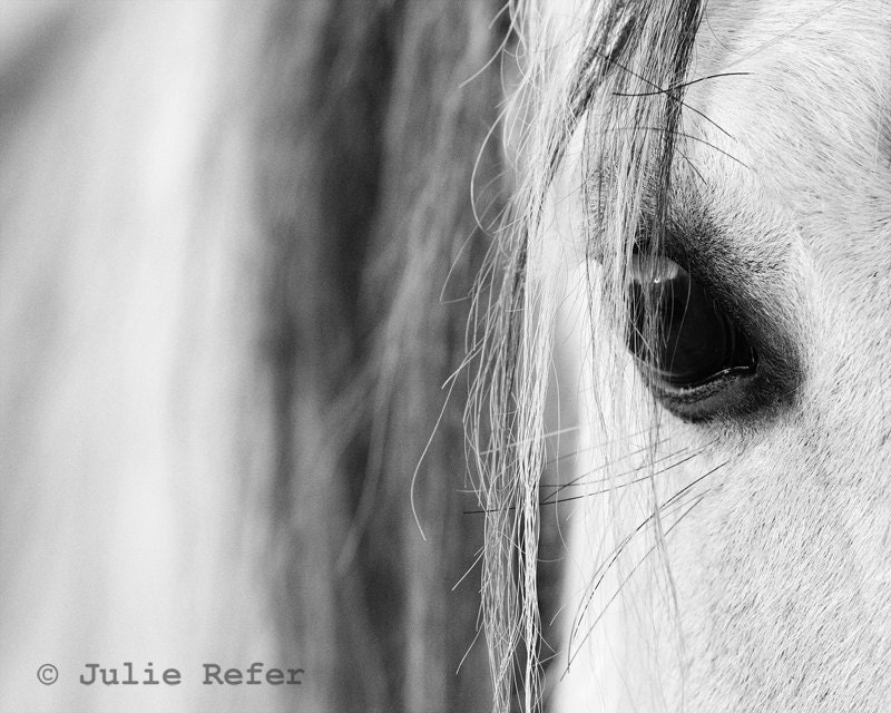 Horse Photography Black and White Equestrian Fine Art by ...
