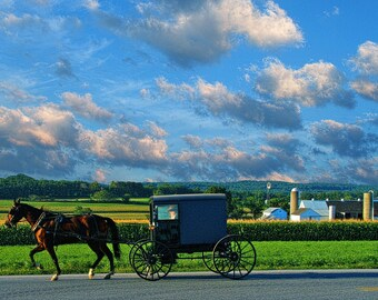 Amish Buggy and Farm Landscape Photography Pennsylvania Dutch Color Photograph Fine Art Photograph Art Print Horse Blue Sky Home Decor