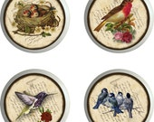 VINTAGE BIRDS Knobs Ceramic Set of 4