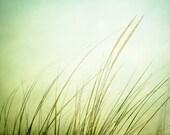 "Fine Art Photography - beach grass print light green pale coastal wall art nature decor seashore photo spring photograph, ""Just Breathe"""
