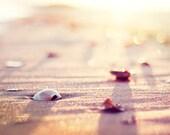 """Beach Photography, seashell print sea shell photo cream neutral peach pale pink shore decor wall art nautical 8x10 Photograph, """"Bliss"""""""