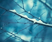 """Winter Photography - snow branch dark blue wall art navy nature photo branches picture botanical photograph, """"Upon a Midnight Clear"""""""