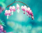 """Flower Photography, teal aqua blue pink floral spring bleeding heart print turquoise nature wall photo, 8x10 Photograph, """"Follow Your Heart"""""""
