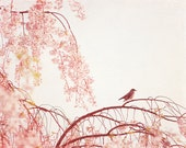 "Nature Photography - birds tree pastel pink wall art pretty nursery print light pale baby girl - 11x14, 8x10 Photograph, ""Little Dreamer"""