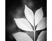 "Black and White Photography - nature leaf black white photos monochromatic print wall art - 16x20, 11x14, 8x10 Photograph, ""Designer Leaves"""