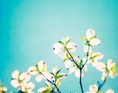 """Flower Photography, aqua prints blue nursery decor white green spring wall floral photo botanical branches 10x10 Photograph, """"Skies of Blue"""""""