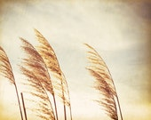 "Nature Photography - beach grass botanical art print beige brown cream neutral decor fine art photo - 11x14, 8x10 Photograph, ""Light Breeze"""