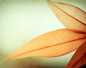 "Modern Photography, autumn fall orange light green print botanical abstract photo wall art leaves leaf, 10x15, 8x12 Photograph, ""Grace"""