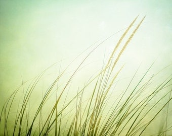 "Fine Art Photography - beach grass print light green pale coastal wall art nature decor seashore photo spring photograph, ""Just Breathe"""