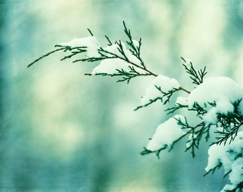 "Winter Photography - turquoise mint green snow branch nature teal print white branches botanical wall art photograph, ""Winter Wonderland"""