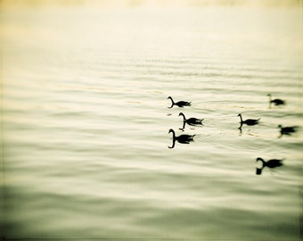 "Nature Photography - bird print olive green brown wall art lake beige nature photo geese - 11x14, 8x10 Photograph, ""The Pace of Nature"""
