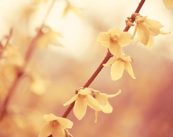 """Floral Photography - spring flower photography yellow gold nature branches rust beige brown wall art print - 8x10, 11x14 """"Spring Blossoms"""""""