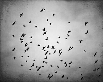 "Black and White BIrd Photography - bird wall art gray grey monochromatic art print decor fine photo - 16x20, 11x14, 8x10 Photograph, ""Swarm"