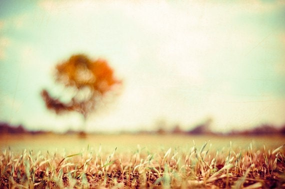 "Autumn Photography - fall tree landscape field cream wall art print country gold yellow rust orange - 24x36, 8x12 Photograph, ""In My Dreams"""