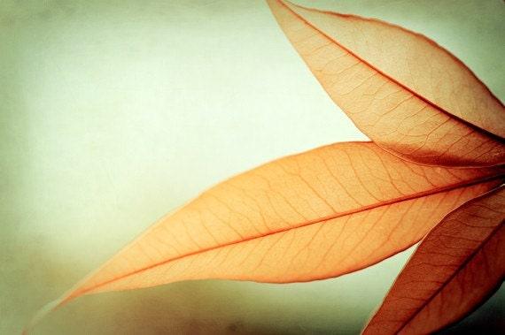 "Modern Photography, autumn fall orange light green print botanical abstract photo wall art leaves leaf, 10x15, 8x12 Photograph, ""Grace"""