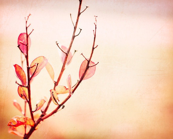 """Fine Art Photography - pink wall art peach decor botanical print branches nature photos red coral - 11x14, 8x10 Photograph, """"Feminine Touch"""""""