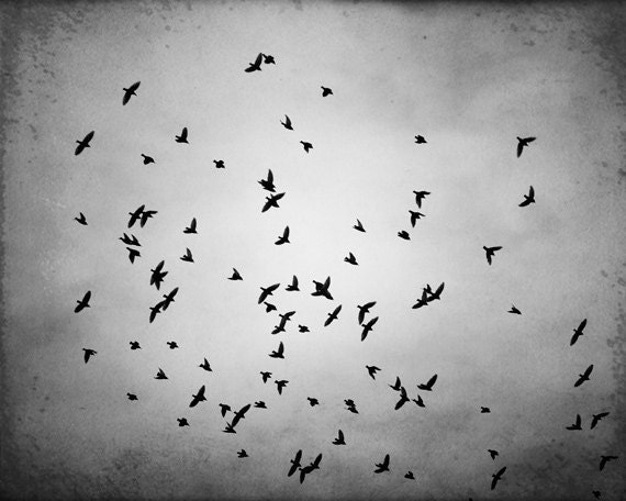 "Black and White BIrd Photography - bird wall art gray grey monochromatic art print decor fine photo - 16x20, 11x14, 8x10 Photograph, ""Swarm"