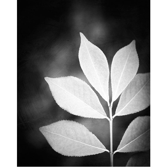 "Black and White Photography - nature leaf black white photos monochromatic print wall art - 16x20, 11x14, 8x10 Photograph, ""Designer Leaves"""