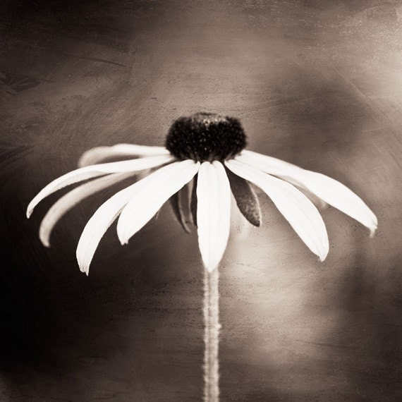 fine art photography black white sepia flower by