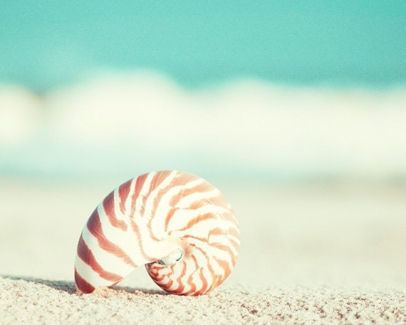 "Beach Photography - nautilus shell seashell seashore teal turquoise aqua wall art orange shore print - 11x14, 8x10 Photograph, ""Nautilus"""