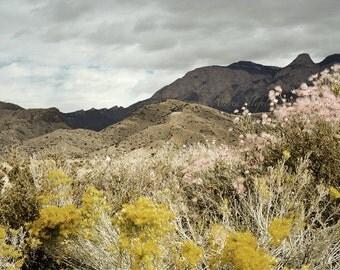 Mountain Photography Print 11x14 Fine Art New Mexico Sandia Mountains Wildflowers Desert Southwest Autumn Landscape Photography Print.