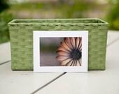 The Day's Eye Photo Greeting Card - Blank Inside - Macro Daisy Flower Photograph