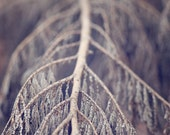 Wintry Soft Purple & Brown Pine Bough Photograph - Winter Pine Tree Branch Nature Photography