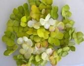 50 Sugar Hydrangea Singles- Any color