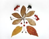 Autumn photo. Herbarium composition. Photo 20x20cm ( 8x8inches ). Woodland red and white berrys forest photo