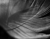 SOFT SHADOW - Fine Art Photograph - Framed 11x16.5 Print by Elizabeth Root Blackmer