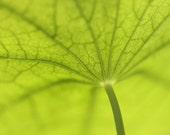 Parasol Fine Art Photography