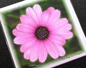 Pack of 6 Blank Greetings Cards - Pink Daisy (122) - Thank You Note Card Set Notelets Birthday Flower Floral Pink