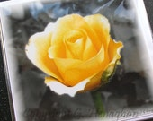Pack of 6 Blank Greetings Cards Yellow Rose (320) - Thank You Note Cards Set Notelets Birthday Flower Floral