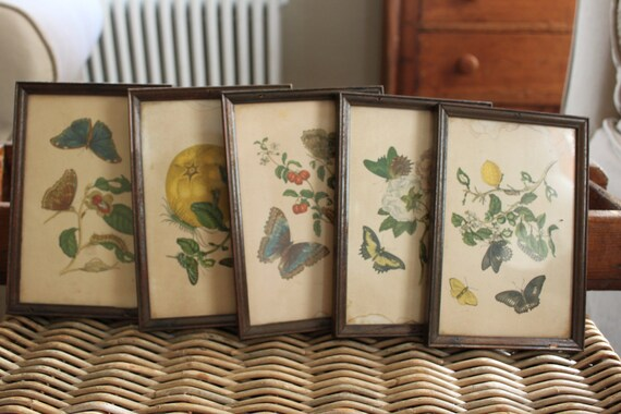 RESERVED for Jill - Vintage Framed Botanical Book Plate Prints - Butterfly, Bug