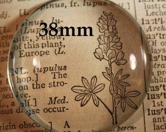 12  Extra Large 38 mm Glass Round Cabochons for Blank Photo Pendant Trays customizable blank Settings LEAD FREE