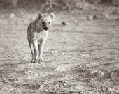 African Hyena Photo - Wall Art - 10x10 inch Hyena Photograph, Nature Photo, sepia, gift